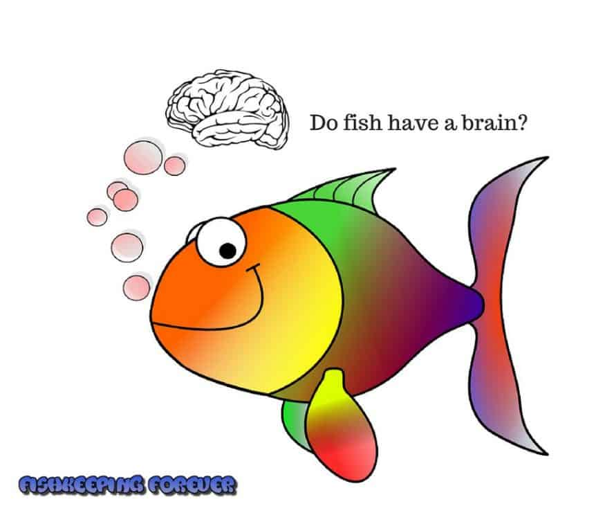 do fish have a brain?