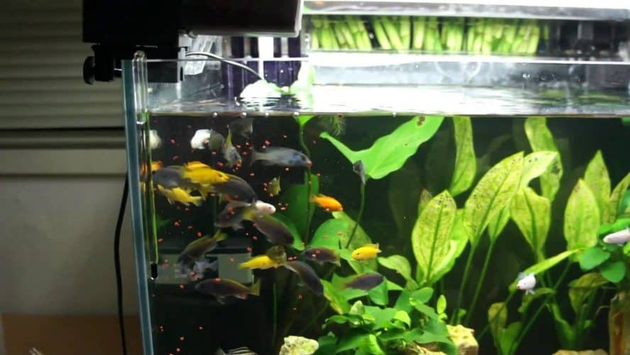 Best Automatic Fish Feeders - No Vacation worries! 1