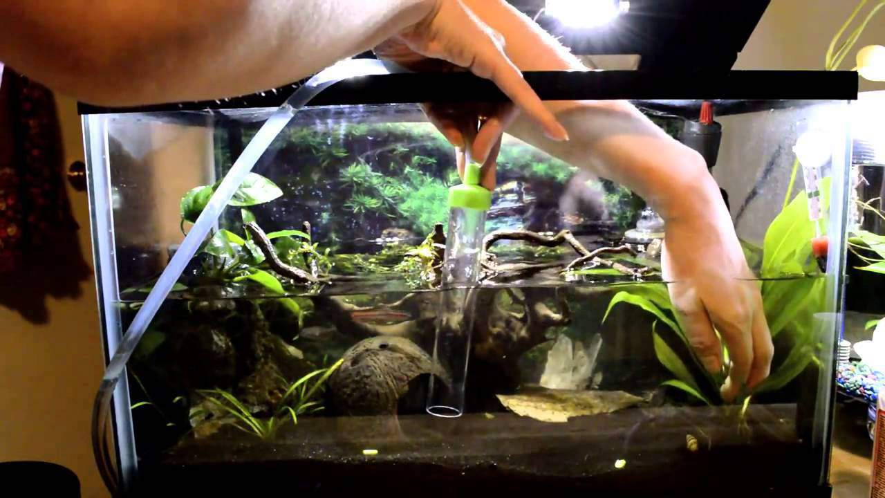 How to do a water change