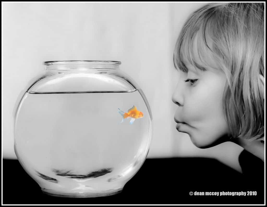 What Is The Lifespan Of A Goldfish? You Won't Believe It! 1