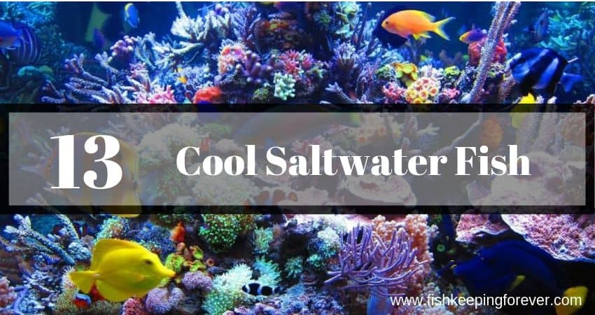 13 cool saltwater fish