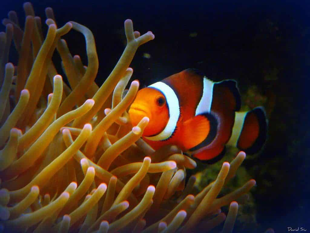 35 perfect names for a pet clownfish