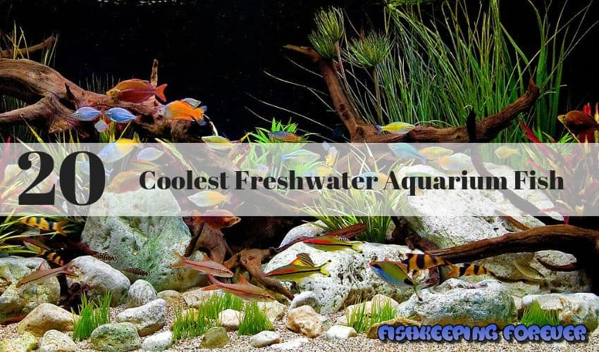 coolest-freshwater-aquarium-fish