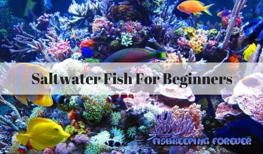 saltwater fish for beginners