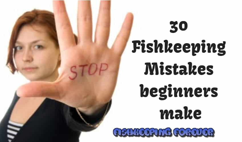 30 FishkeepingMistakes beginners make