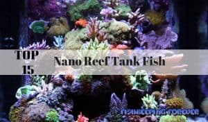 top 15 nano reef tank fish
