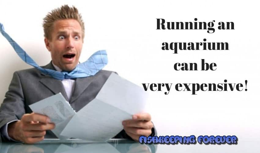 Running an aquarium can be very expensive