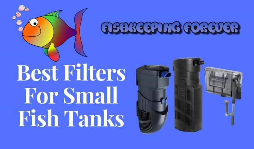 best filters for small fish tanks