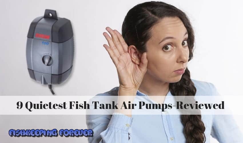 9 Quietest Fish Tank Air Pumps