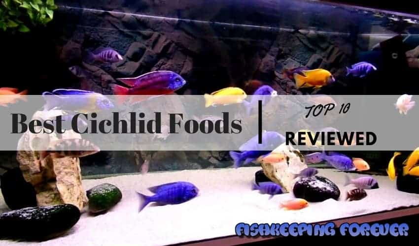 Best Cichlid Foods