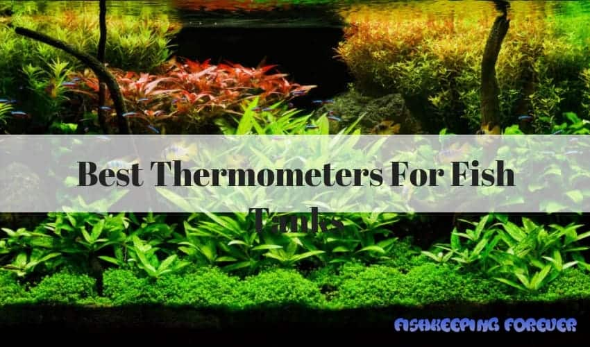 Best Thermometers For Fish Tanks