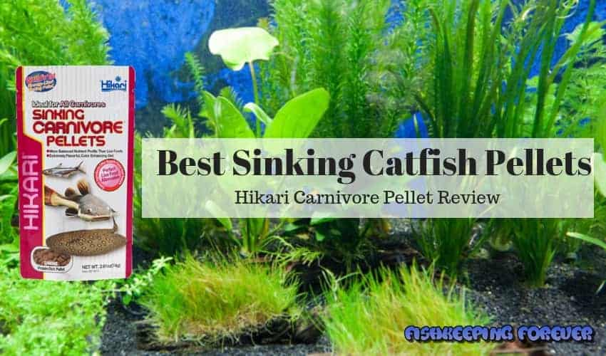 Best sinking catfish pellets