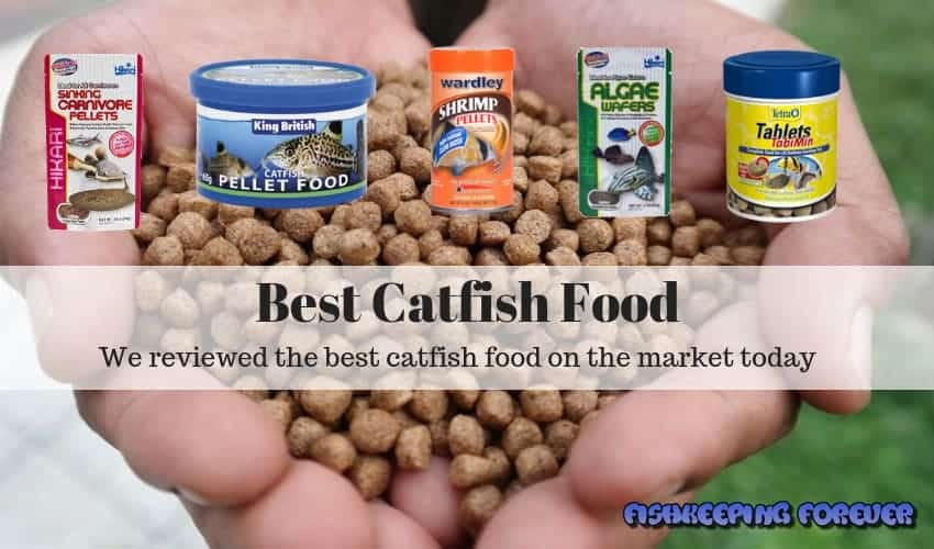 best catfish food