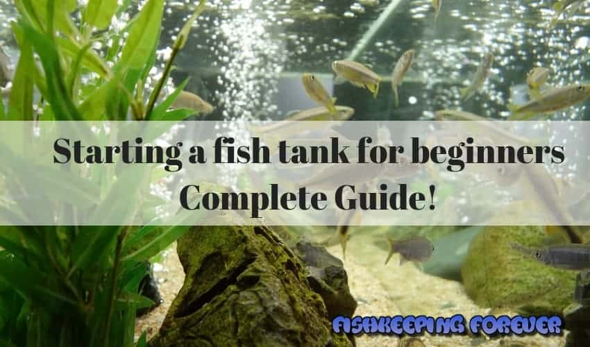 Starting a fish tank for beginners - Complete Guide!