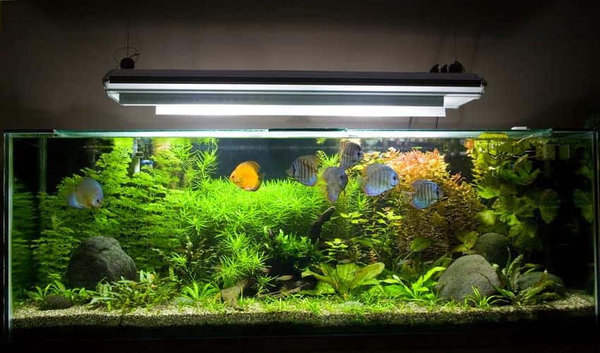 fish tank lighting.