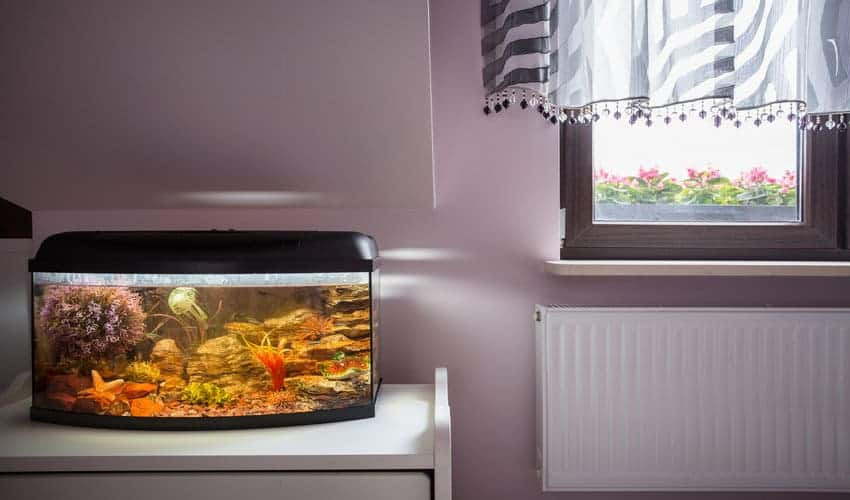 Where to place a fish tank