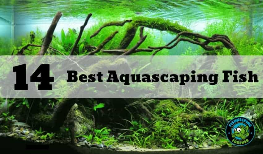 14 best aquascaping fish