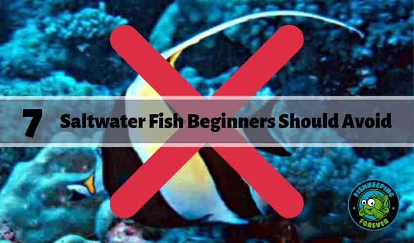 7 Saltwater Fish Beginners Should Avoid