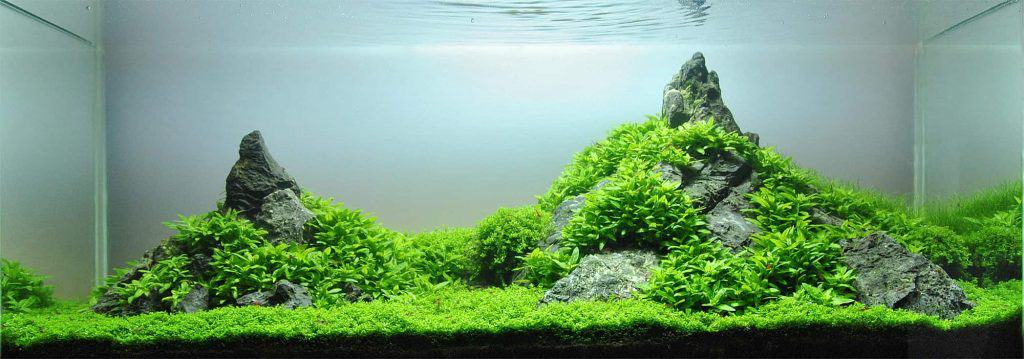 Best Aquascaping Tools Every Aquarist Should Use 1