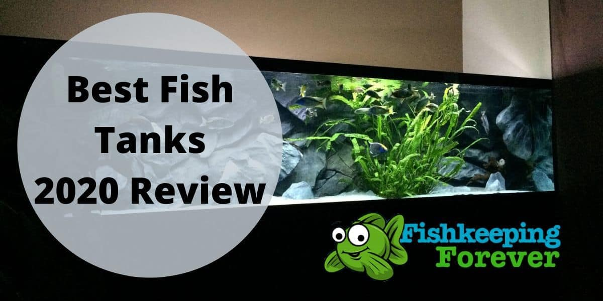 best fish tank review