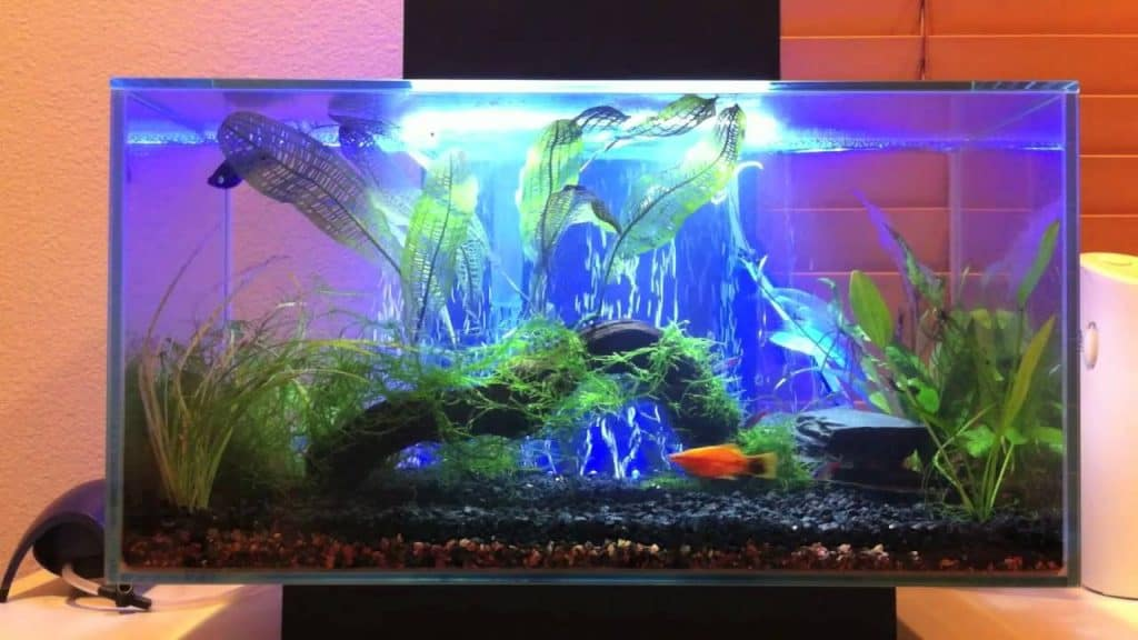 Best Fish Tanks For You In 2019 - Top 10 reviewed 18