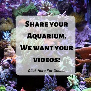 Share your Aquarium. We want your videos