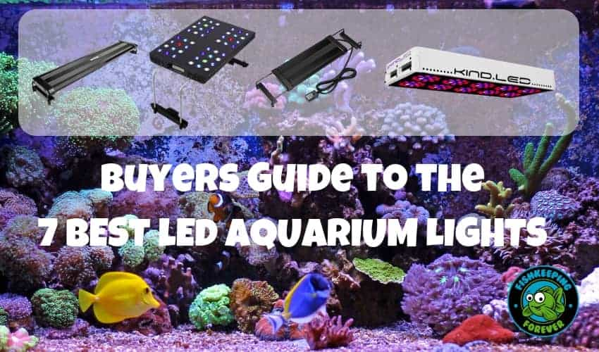 7 BEST lED AQUARIUM LIGHTS