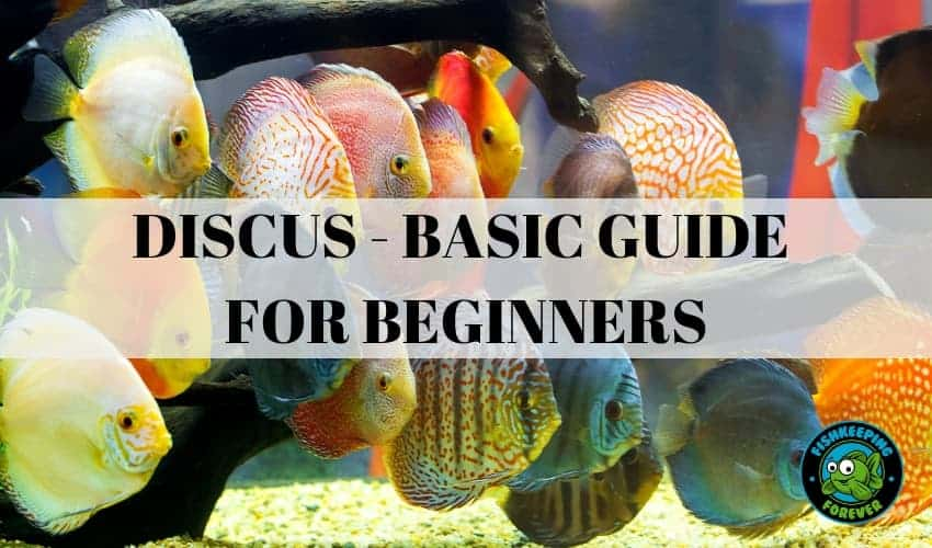 DISCUS - BASIC GUIDE FOR BEGINNERS
