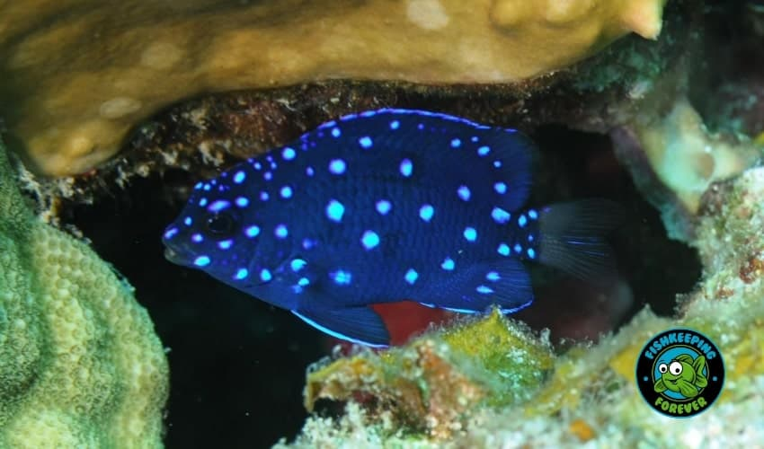 7 Saltwater Fish Beginners Should Avoid 1