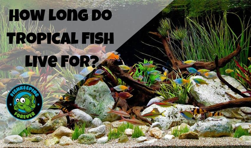 How-Long-Do-Tropical-Fish-Live-For?