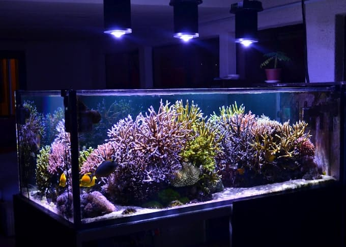7 Best Aquarium LED Lights - 2020 Updated Review 29