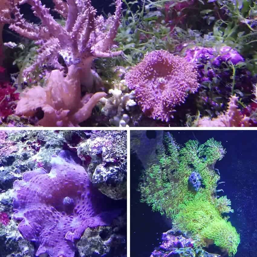 9 foot reef tank with stingray