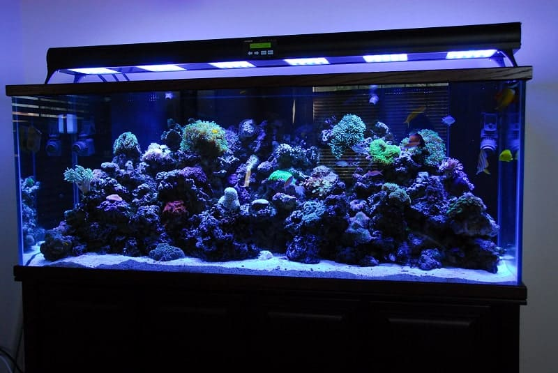 7 Best Aquarium LED Lights - 2020 Updated Review 23