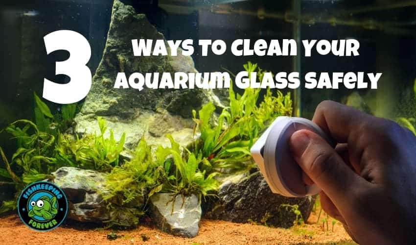 3 ways to clean your aquarium glass safely