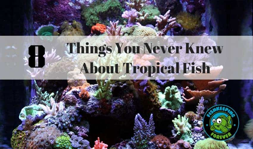 8 Things You Never Knew About Tropical Fish