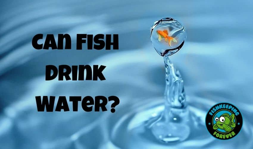 Can Fish Drink Water?