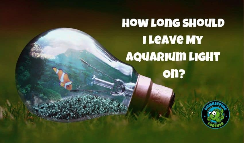 How-Long-Should-I-Leave-My-Aquarium-Light-On?