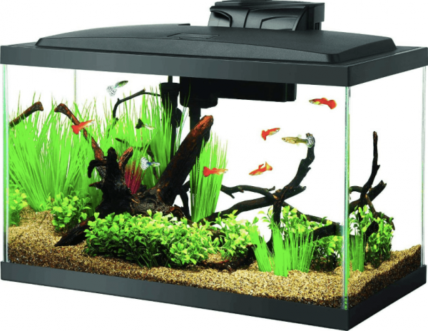 BEST FILTER FOR A 10 GALLON FISH TANK