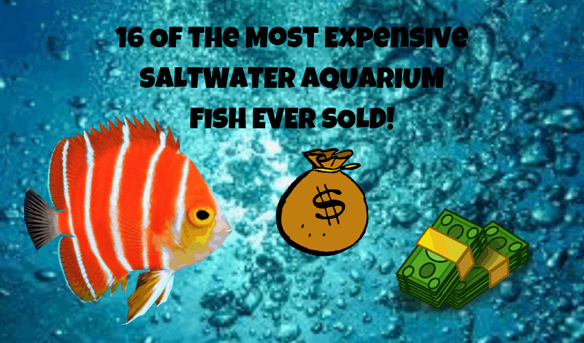 expensive saltwater fish