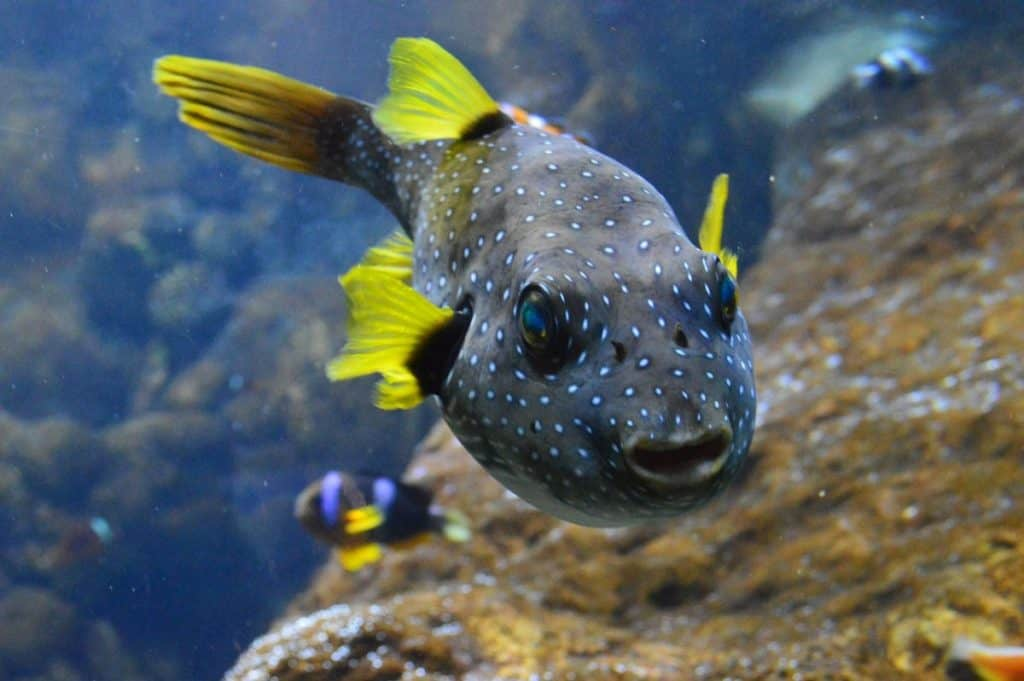 16 most expensive saltwater aquarium fish