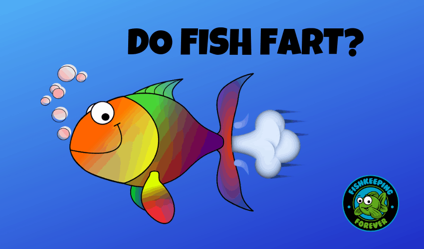 DO FISH FART