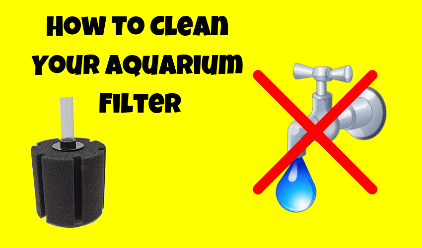 How to clean an aquarium filter