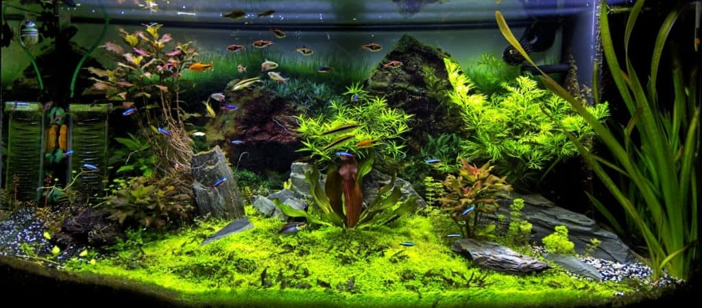 Well planted aquarium