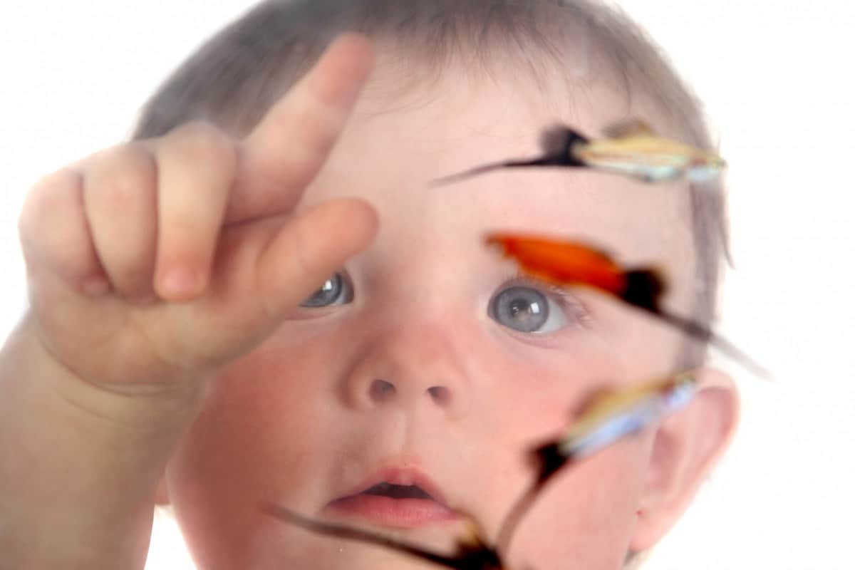 best pet fish for a toddler
