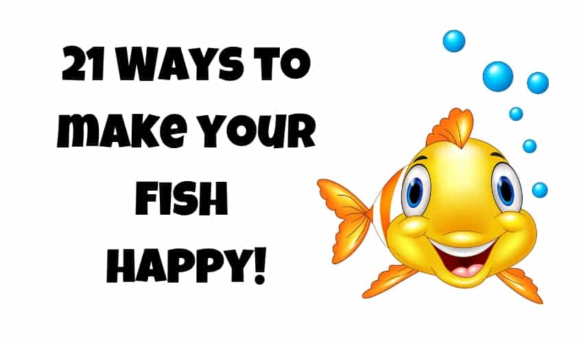 21 Ways to make your Fish Happy! 1