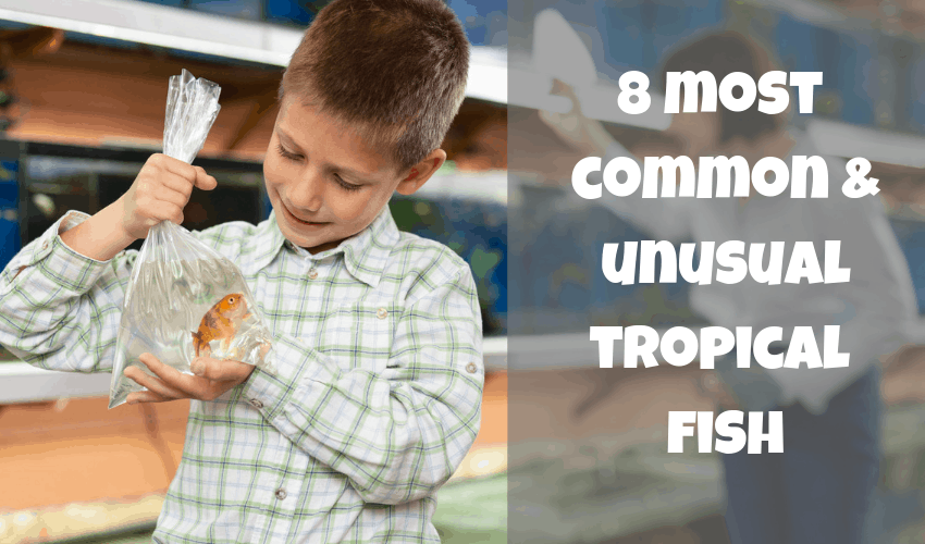 8 most common and unsual tropical fish