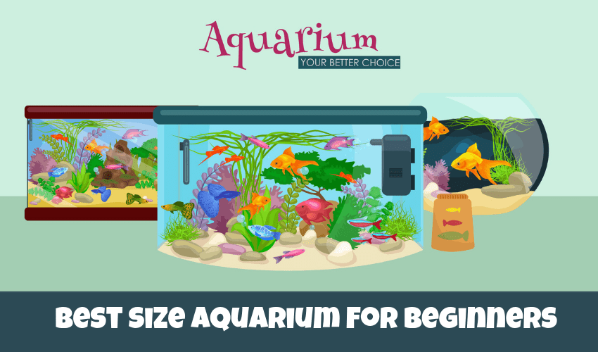 whats the best size aquarium for beginners
