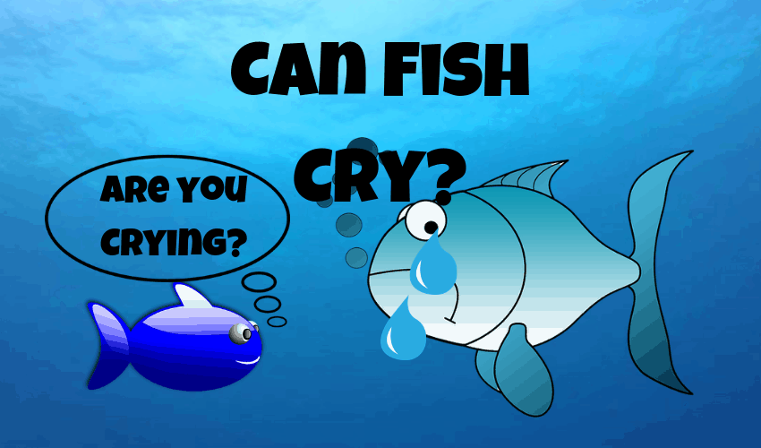 Can fish cry?
