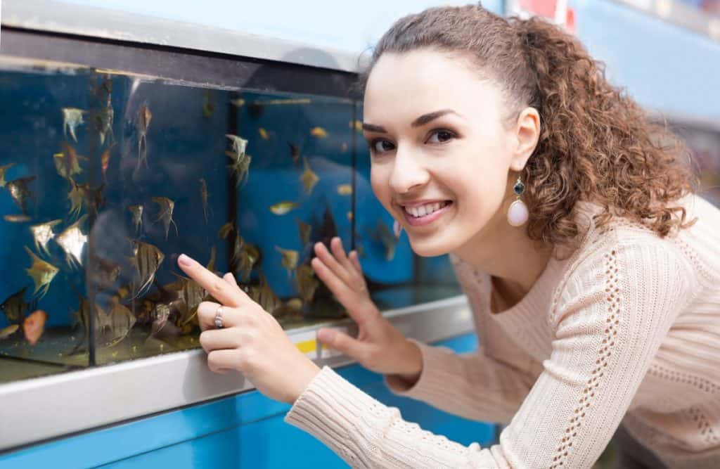 where to buy your first pet fish