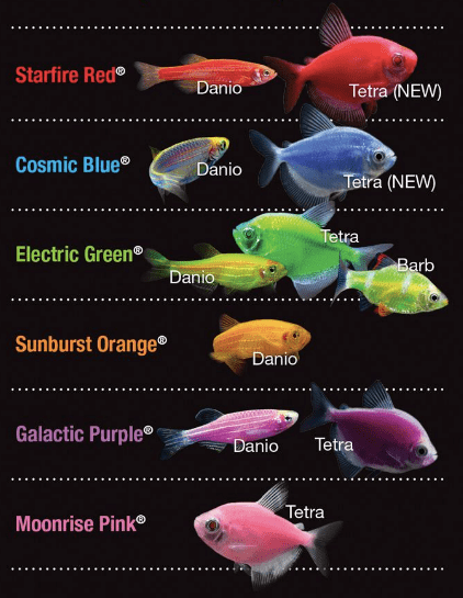 Glofish Types & Breeds: Colors | Types | Cost | Size | Lifespan 2